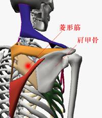新宿で背中の痛み、肩甲骨の痛みの改善